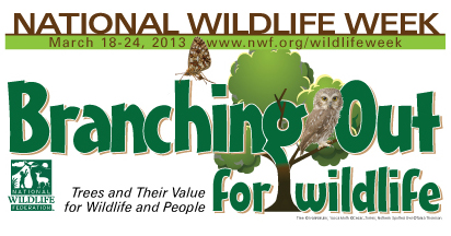 National Wildlife Week for Educators