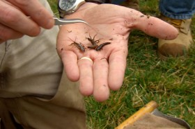 This is a photo of Macroinvertebrate_Counting