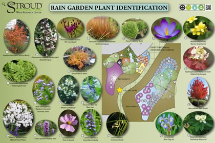 Manage Stormwater through Rain Gardens